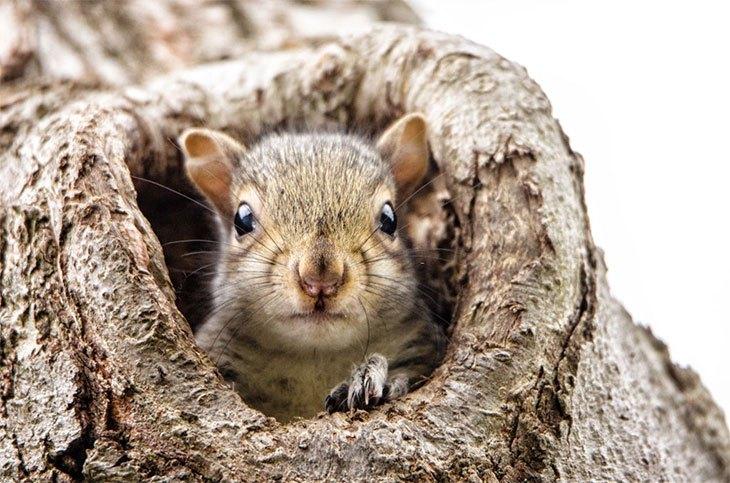 squirrels digging holes in yard