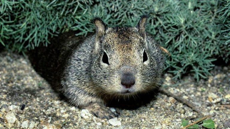 do squirrels dig holes